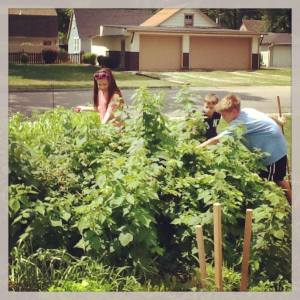 Some patrons picking raspberries in the teen garden during Summer Reading Club last year.