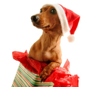 Dog with Santa Hat Popping out of Present